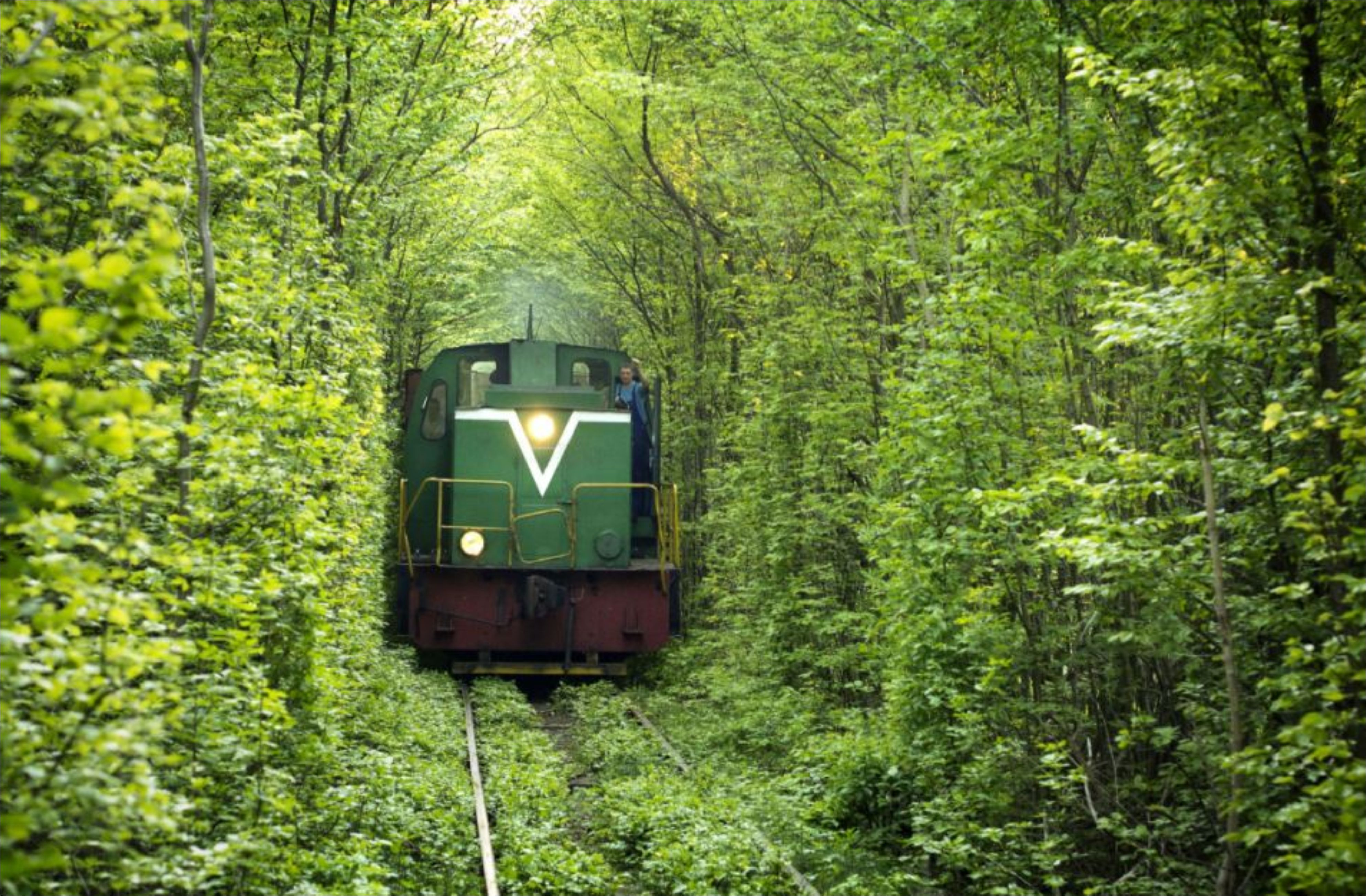 туннель из деревьев загрузить
